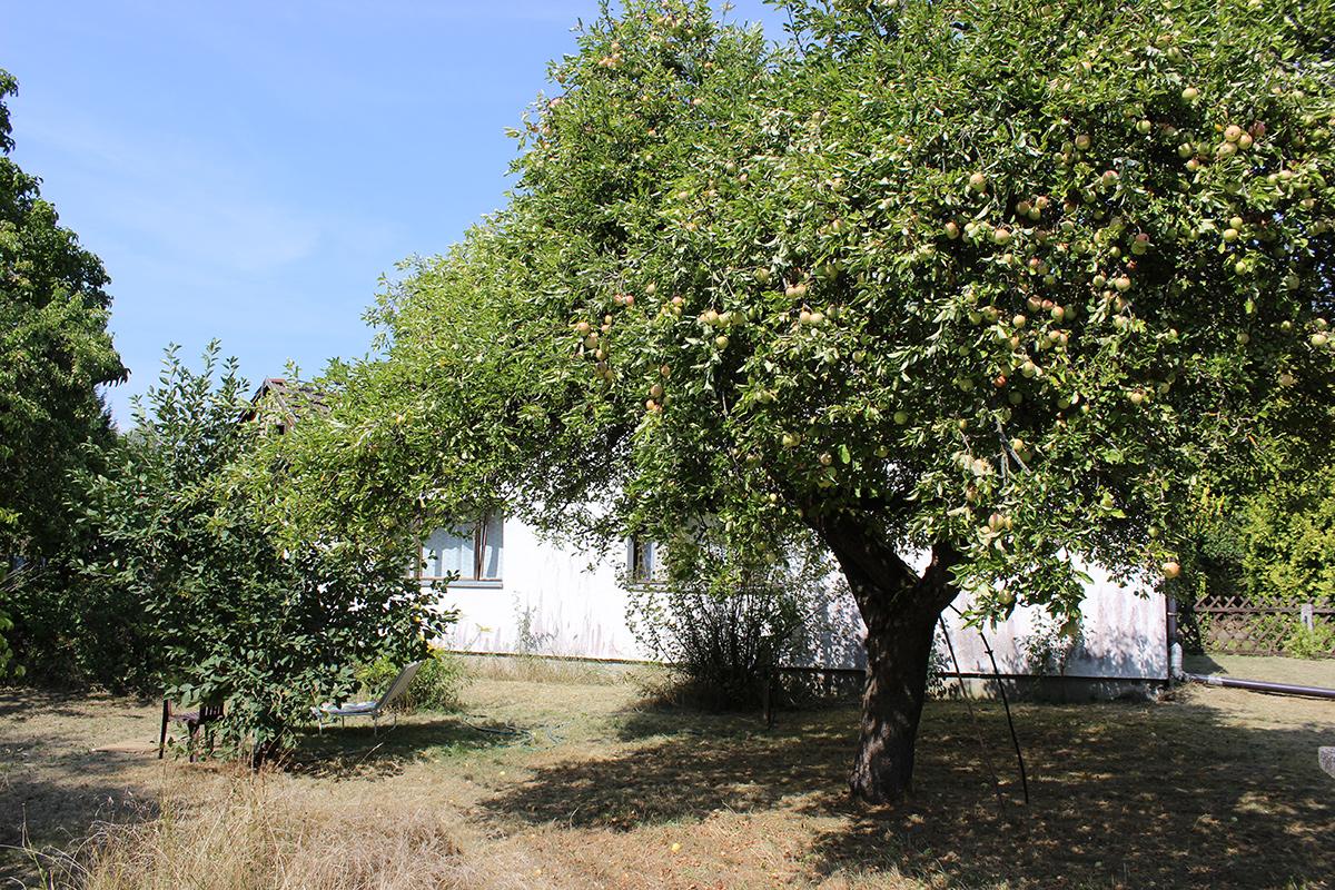 Das Ferienhaus-Uckermark bald sind die Birnen reif. Urlaub und ernten im Boitzenburger Land schon ab 29,- Euro pro Tag