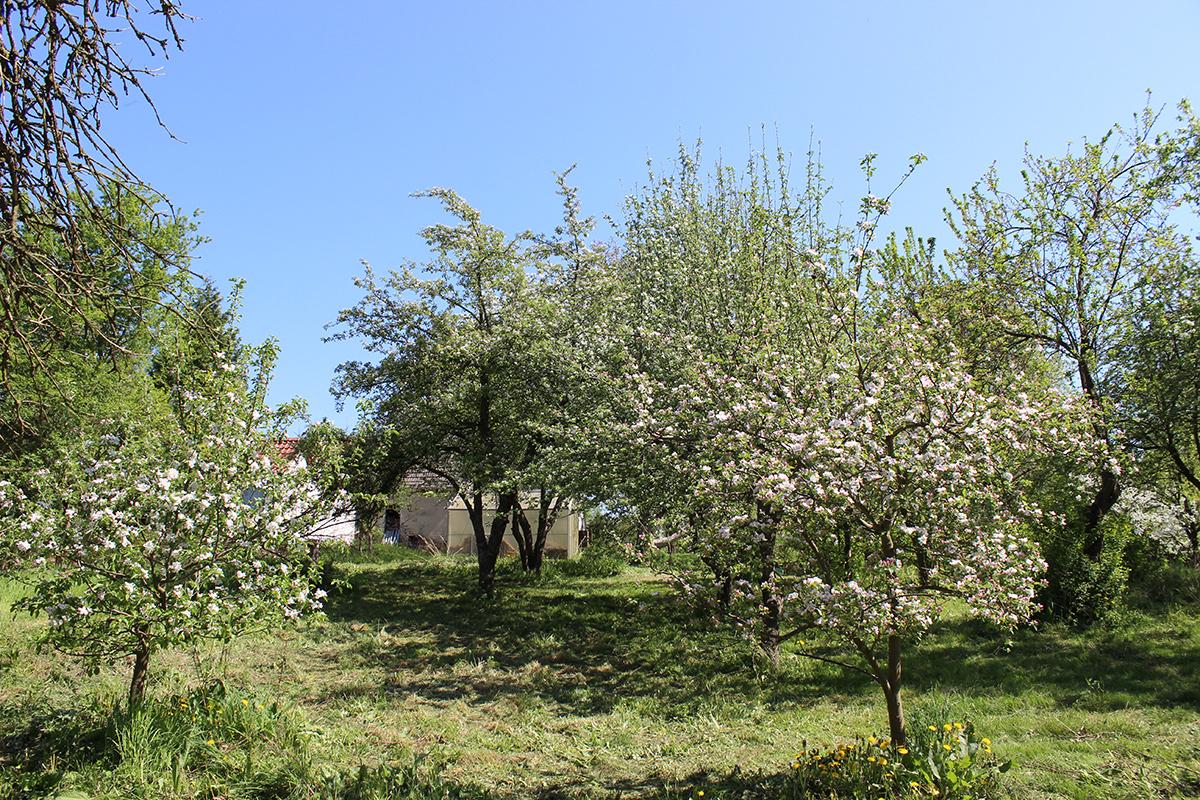 Das Ferienhaus-Uckermark Der Garten, Ferien im Boitzenburger Land schon ab 29,- Euro pro Tag